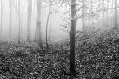#003 Muldental_Herbst