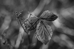 #006 Muldental_Herbst